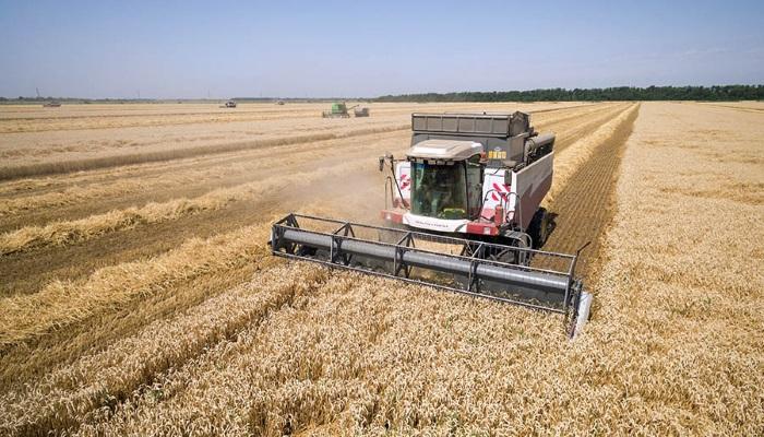 Доля продовольственного зерна в новом урожае снизилась