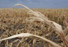 ЕС отказался помогать страдающим от засухи финским и прибалтийским фермерам