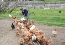 Единый «налоговый патент» для ЛПХ поможет фермерам развивать хозяйства