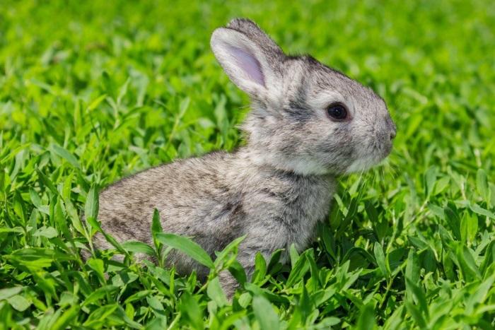Еще никогда выращивание кроликов на балконе не было таким простым