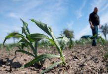 Европа может потерять десятки миллиардов евро из-за жары