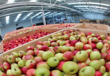Хранилища Кубани могут принять на 38 тыс. тонн фруктов больше