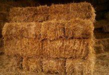 Из-за жары солома в Европе стоит дороже зерна