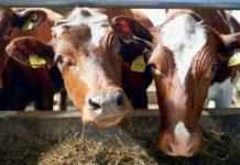 Эксперты Luke: в ближайшие годы могут прекратить свое существование свыше тысячи финских молочных ферм