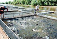Кабмин РФ утвердил перечень товарной аквакультуры с господдержкой страхования на 2019 год