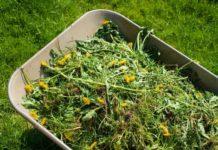 Как использовать сорняки себе на пользу