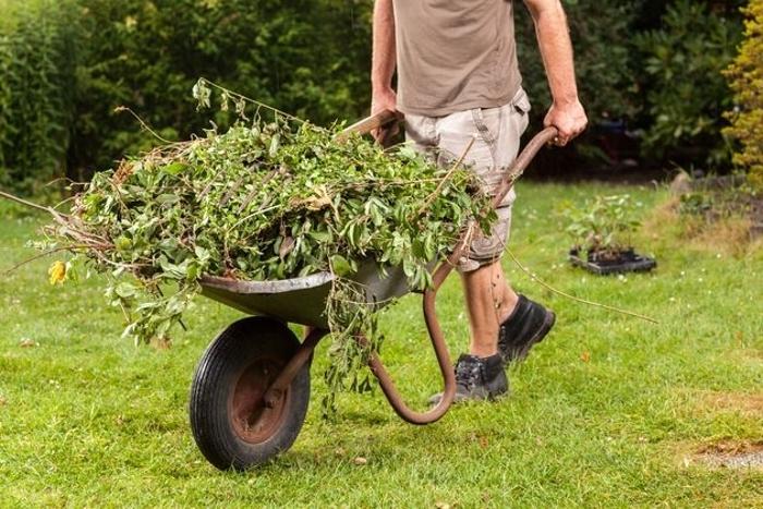 Как я увеличил урожай ягодника, за счет сорняков