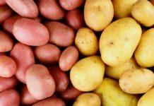 Картофельный союз России прогнозирует проблемы с поставками семенного картофеля