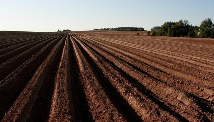 Китайским фермерам хотят предоставить дальневосточные гектары?