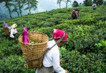 Комментарий. Индия увеличит экспорт продовольствия