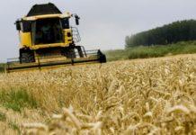 Комментарий. Президент поручил растить ценное зерно. Кто готов?
