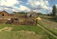 Комментарий. Роль фермеров в сохранении и развитии сельских территорий