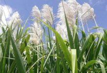 Куба реформирует сельское хозяйство
