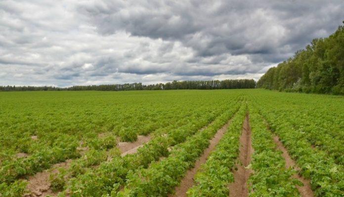 Лукашенко: Развивать агропром дешевле, чем импортировать продовольствие