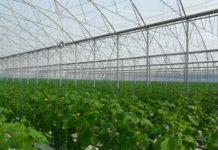 «Магнит» строит еще 60 гектаров теплиц