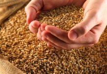 Минсельхоз РФ предлагает увеличить объем зерна для реализации из госфонда