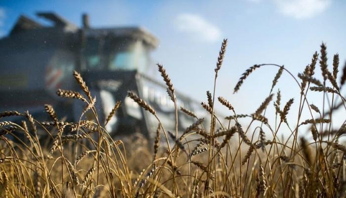 Минсельхоз США дал новый прогноз по урожаю российского зерна
