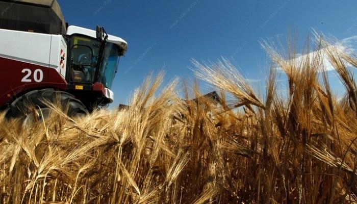 Минсельхоз США повысил прогноз по производству пшеницы в России до 68 млн тонн