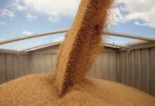 Минсельхоз: на 22 августа экспорт зерновых составил 7,8 млн тонн