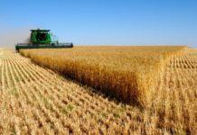 Минсельхоз не увидел предпосылок для введения пошлин на экспорт пшеницы