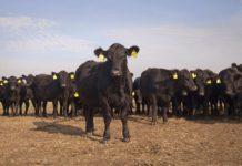 «Мираторг» инвестировал свыше 5,4 млрд рублей в проект мясного животноводства в Смоленской области