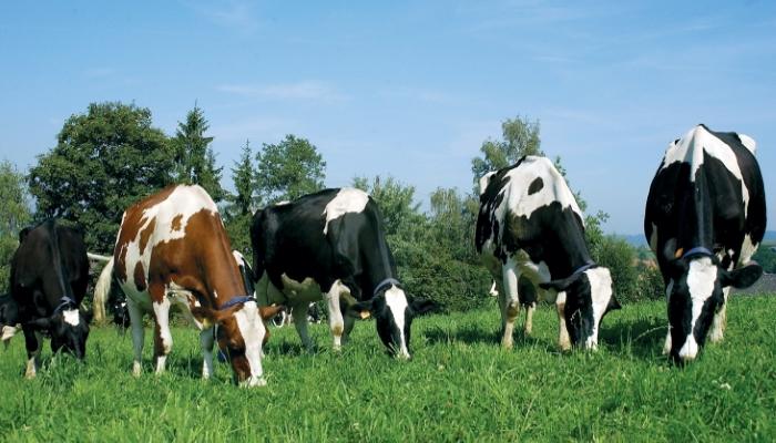 Нормы содержания антибиотиков в животноводческой продукции вступили в силу