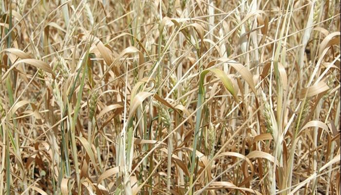 Правительство Германии пока не готово выделить фермерам 1 млрд из-за засухи в качестве помощи