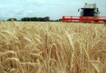 Приамурье готово поставлять в КНР 100 тыс. тонн зерновых и 300 тыс. тонн сои в год