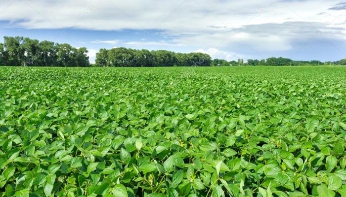 РФ в этом сельхозгоду может удвоить экспорт сои и довести его до 1 млн.т.