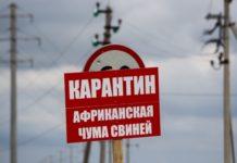 Россельхознадзор: Под Правдинском не смогли вовремя распознать АЧС