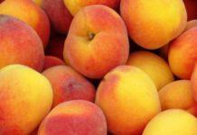 Россельхознадзор решил ограничить ввоз сербских персиков