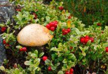 Россияне смогут легально продавать грибы и ягоды