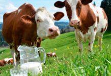 Российские кондитеры нуждаются в белорусском молоке