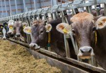 «Русагро» планирует построить в Самарской области 8 ферм на пять тысяч голов дойного стада