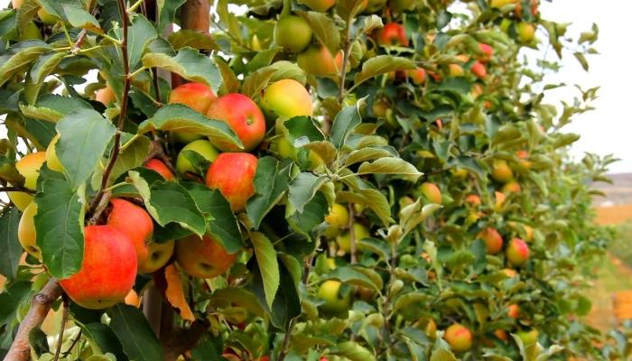 СКФО имеет потенциал развития высокорентабельного сельского хозяйства