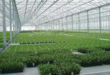 СМИ: Япония предлагает России совместно выращивать помидоры в теплицах на Курилах