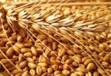 Сельхозорганизации РФ в июле увеличили продажу зерна на 41,5%