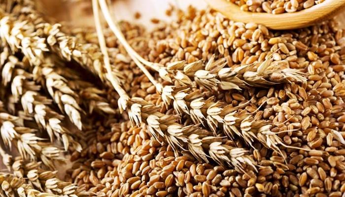 Сельхозорганизации в 1-м полугодии увеличили продажу зерна на 40% — Росстат