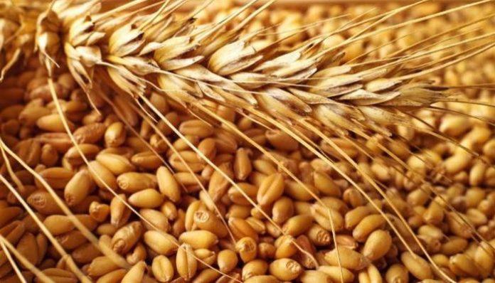 Ситуация на российском зерновом рынке