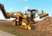 Стартовая урожайность сахарной свеклы на 30% ниже прошлогодней
