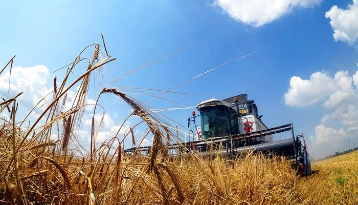 Урожай и экспорт зерна из России: соберем меньше, продадим дороже