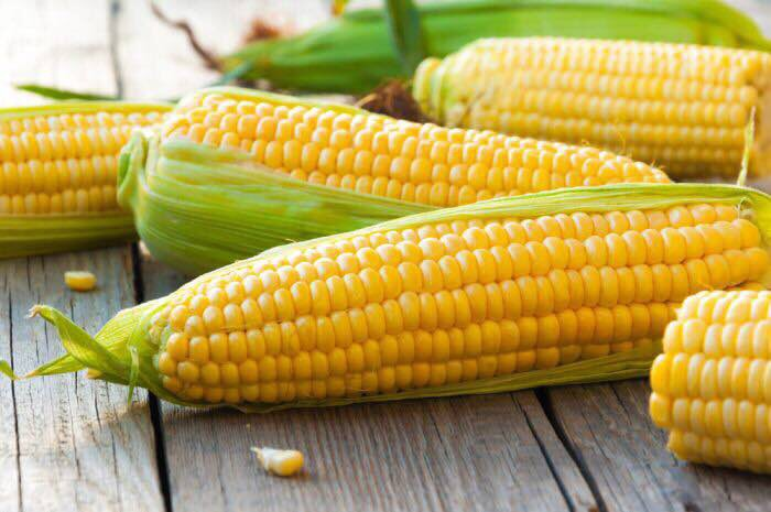 Урожай кукурузы в новом сезоне будет на 12% ниже предыдущего