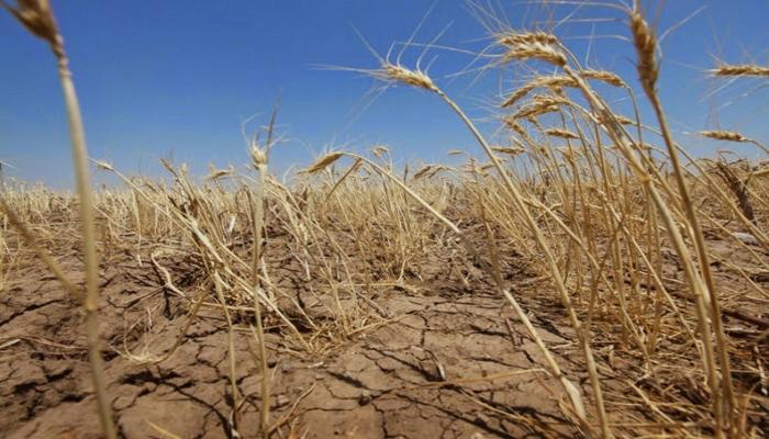 Ущерб аграриев из-за погодных ЧС приблизился к 9 млрд рублей