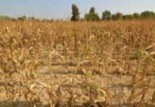 В 2018 году ущерб от ЧС агробизнесу России может стать рекордным за пятилетие