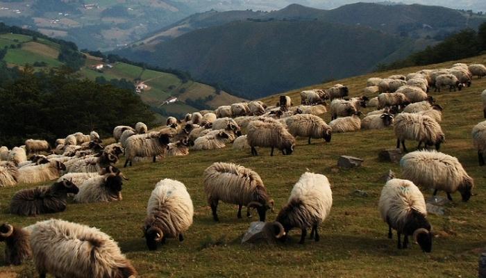 В Дагестане создадут автоматизированную базу данных сельскохозяйственных земель