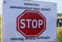 В Калининградской области выявили ещё два очага вируса АЧС
