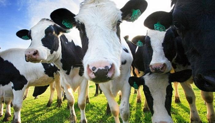 В Кировской области необходимо построить не менее десяти молочных ферм