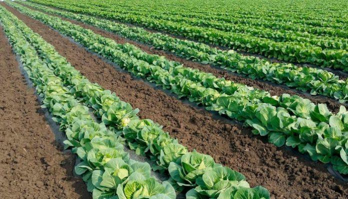 В Костромской области разработана новая программа развития сельского хозяйства