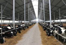 В Красноярском крае открыли новый молочный комплекс в Канском районе