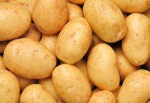 В Крыму готовят инвестплощадку для выращивания ярославского картофеля